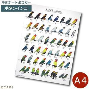 ラミネートポスター【A4サイズ】ラブバード2 ボタンインコ|torimura