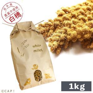 CAP! 鳥の餌 国内産 白粟の穂 1kg 2019年産 ※クラフトパッケージ※|torimura