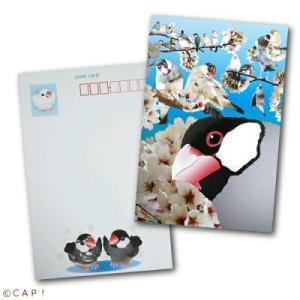 【piyopiyobrand】ポストカード 文鳥|torimura