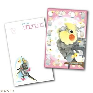 【piyopiyobrand】ポストカード オカメインコ:ピンク 両面カラー|torimura