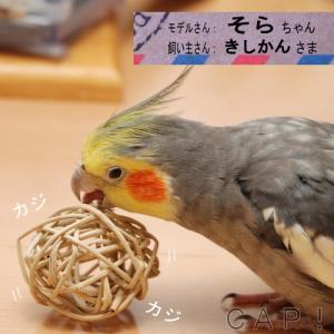 マンチボール 4cm|torimura|02