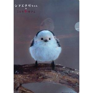 【ことりカフェ】A4クリアファイルシマエナガちゃん|torimura