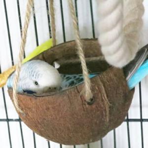 とりきち横丁 CAP! 鳥のおもちゃ ミニ・ココナッツ 2穴開き |torimura