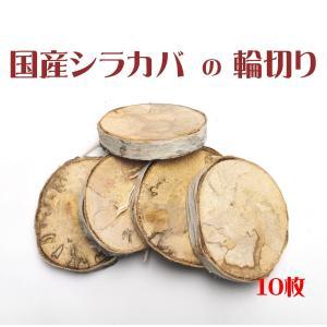 インコのおもちゃ 国産シラカバの輪切り 10枚セット(訳あり品)|torippie