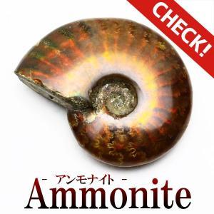 アンモナイト 化石 原石  771-1|tosho-stones