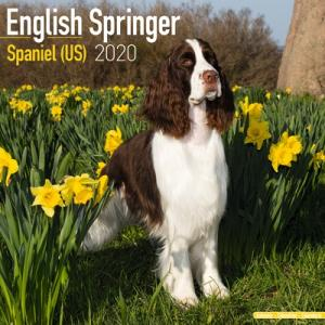 2020ドッグカレンダー 6「イングリッシュスプリンガースパニエル」(英国製)|tosindo