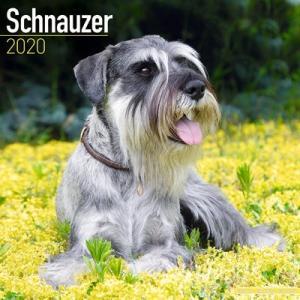 2020ドッグカレンダー 22「シュナウザー/EURO/断耳なし」(英国製)|tosindo