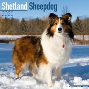 2020ドッグカレンダー 23「シェットランドシープドッグ」(英国製)|tosindo