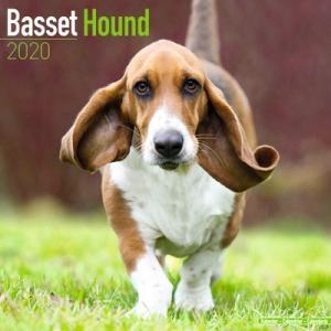 2020ドッグカレンダー 34「バセットハウンド」(英国製)|tosindo