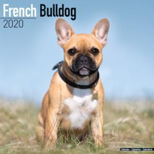 2020ドッグカレンダー 41「フレンチブルドッグ」(英国製)|tosindo
