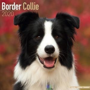 2020ドッグカレンダー 51「ボーダーコリー」(英国製)|tosindo