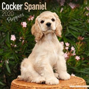 2020ドッグカレンダー 64「コッカースパニエル/子犬」(英国製)|tosindo