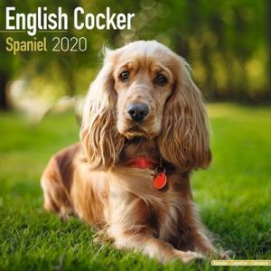 2020ドッグカレンダー 78「イングリッシュコッカー」(英国製)|tosindo