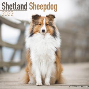2022ドッグカレンダー 23「シェットランドシープドッグ」(英国製)|tosindo