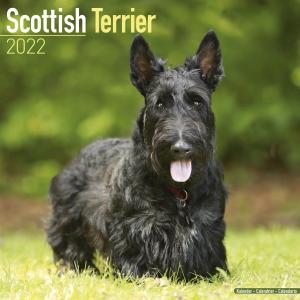 2022ドッグカレンダー 27「スコティッシュテリア」(英国製)|tosindo