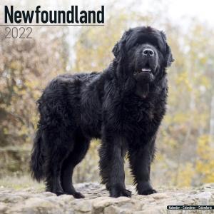 2022ドッグカレンダー 33「ニューファンドランド」(英国製)|tosindo