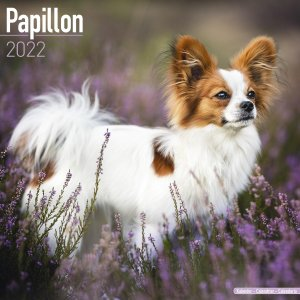 2022ドッグカレンダー 37「パピヨン」(英国製)|tosindo
