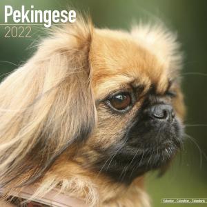 2022ドッグカレンダー 47「ペキニーズ」(英国製)|tosindo