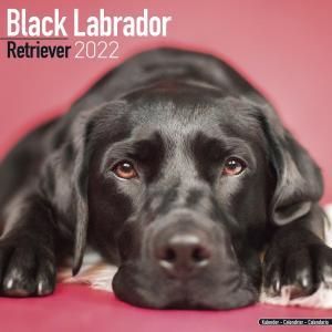 2022ドッグカレンダー 57「ラブラドールレトリバー/ブラック」(英国製)|tosindo
