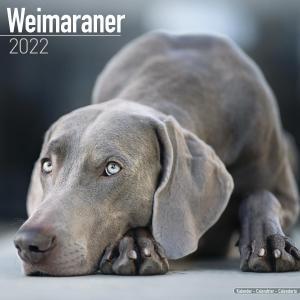 2022ドッグカレンダー 109「ワイマラナー」(英国製)|tosindo