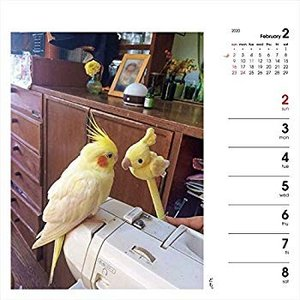 カレンダー2020 週めくりカレンダー いんこ日和 卓上 (ヤマケイカレンダー2020)|totasu888