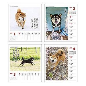 アートプリントジャパン 2020年 犬川柳(週めくり)カレンダー vol.005 1000109214|totasu888