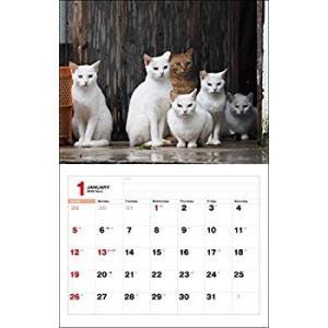 2020猫カレンダー のら (カレンダー)|totasu888