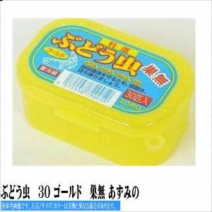 ぶどう虫 30 ゴールド 巣無 あずみの 冷蔵/冷凍|toukaiturigu
