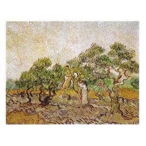絵画 壁掛け 額縁 アートフレーム付き ヴィンセント・ヴァン・ゴッホ 「オリーブ園」 F6号 世界の名画シリーズ プリハード|touo