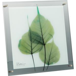 絵画 インテリア アートポスター X RAY ガラス アート「グリーン ユーカリ(Mサイズ)」|touo