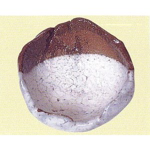 粉引白絵土 tourakubou
