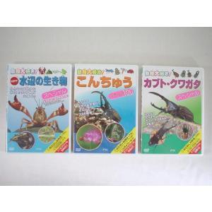 【メール便OK!】 【特価60%OFF!】動物大好き!シリーズDVD第2弾(水辺の生き物・昆虫・カブトクワガタ)|toy-time