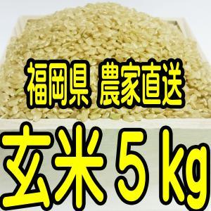 福岡県産  無農薬栽培米 新米 玄米5キロ(分つきも対応しま...
