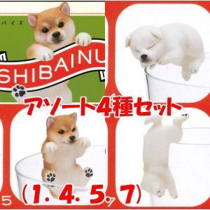 PUTITTO 柴犬 SHIBAINU [アソート4種セット (1.赤毛(のりこえ)/4.白毛(いねむり)/5.赤毛(ひっかかり)/7.白毛(ぶらさがり))]【ネコポス配送対応】|toysanta