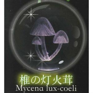 クリスタルライトボール 夜光キノコ 1.椎の灯火茸 の商品画像|ナビ