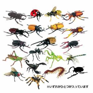 4Dパズル 昆虫 デラックスの詳細画像2
