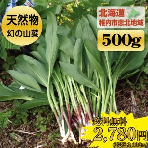 < 送料無料 > 希少 北海道 山菜 天然 行者にんにく 500g