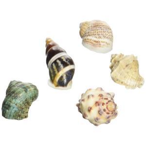 オカヤドカリの 宿替え貝殻Sの関連商品7