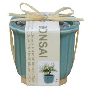 聖新陶芸 和心盆栽セット 黒松 GD-4201の関連商品5