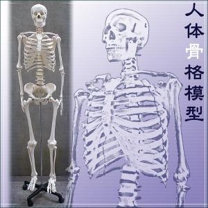 人体骨格模型【ヒューマンスカル】■等身大の骨格をリアルに表現■175cm/新品 骸骨|treasure-com