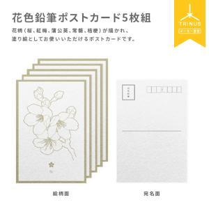 花色鉛筆 ポストカード(5枚組)塗り絵 ギフト プレゼント|trinusstore