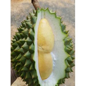 タイ産ドリアン 約1.9kg〜2.2kg Lサイズ 1玉(プーマニー種)