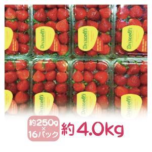 国産イチゴは夏の時期は非常に少なくなります、この時期のケーキ作りやスウイーツ作りには欠かせないのがア...
