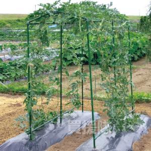菜園つる棚セット TDS-1.8 80cm×180cm 第一ビニール truetools