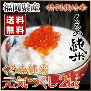 くるめ純米 元気つくし 2kg くるめ純米|truetools