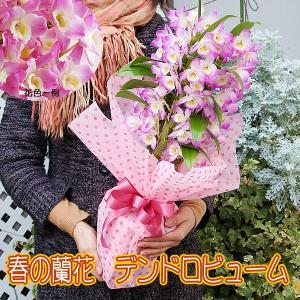 ご注意:花色は写真と異なります。ピンク色の種類はいろいろありますので入荷によります。  【商品サイズ...