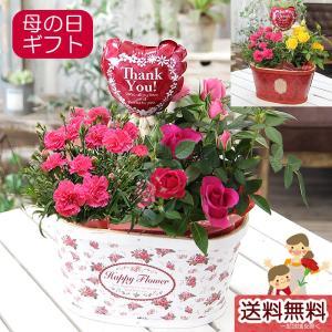 母の日 カーネーション プレゼント 花 ギフト 送料無料 カーネーション とミニバラ 鉢花寄せカゴ  花鉢 鉢植え|tsukaguchi