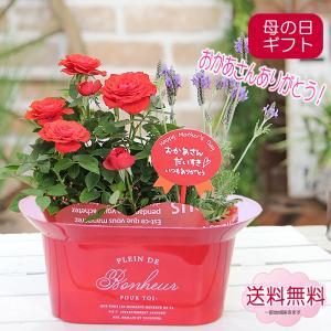 母の日 プレゼント 花 ギフト 花鉢 鉢植え 送料無料 かわいいブリキのミニコンポートにミニバラとラベンダー 季節の鉢花 寄せ鉢花 ミニバラ ラベンダー|tsukaguchi