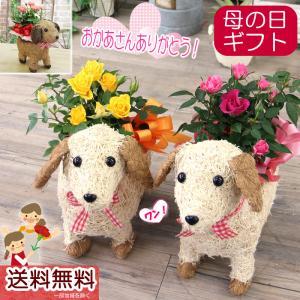 母の日 プレゼント 花 ギフト 花鉢 送料無料 可愛い瞳が人気 わんこの背中に季節の ミニバラ 鉢植え|tsukaguchi