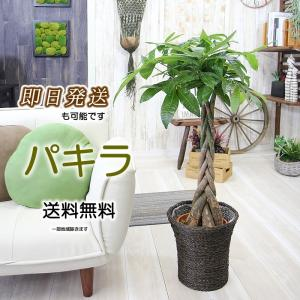 縁起が良いといわれる発財樹パキラ 鉢カゴとセットです 送料無料 パキラ 7号  観葉植物